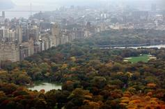 """""""Central Park Karen"""" Amy Cooper Fired From Job, Issues Apology"""