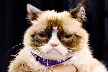 Grumpy Cat, Beloved Meme Feline, Has Died At 7