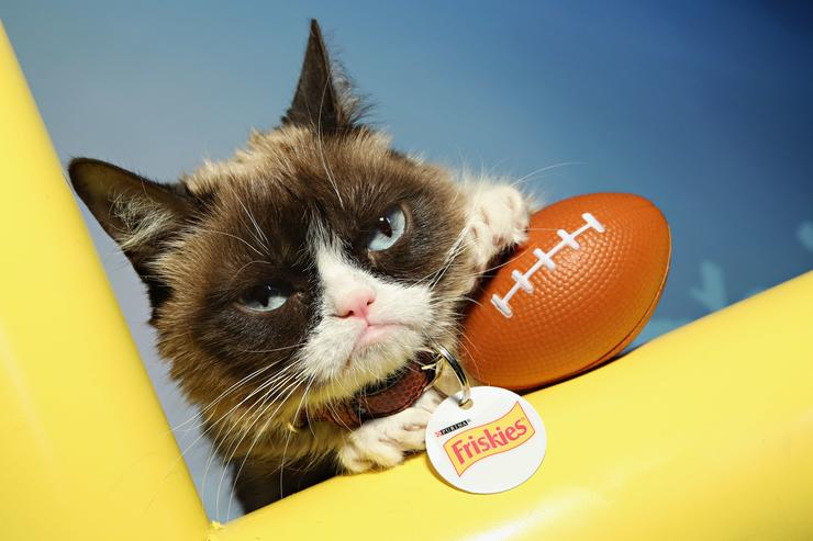 Grumpy Cat visits the SiriusXM set at Super Bowl 50 Radio Row at the Moscone Center on February 4, 2016 in San Francisco, California